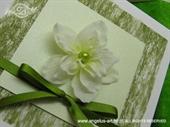 Ekskluzivna čestitka - White and Green