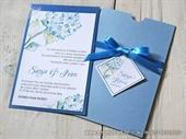 Plava hortenzija- Charm 2